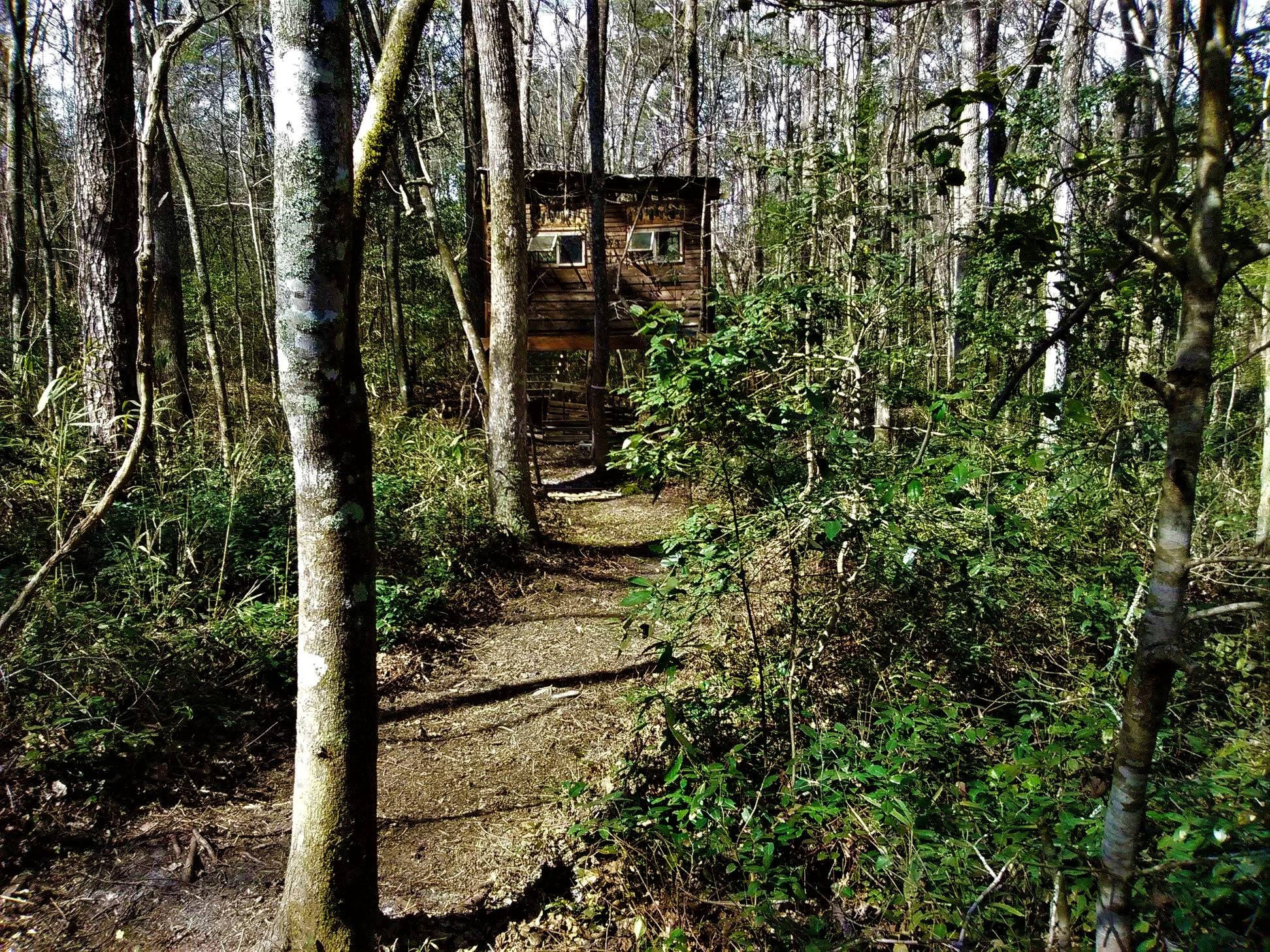 AIR-Walterboro-Treehouse Trails