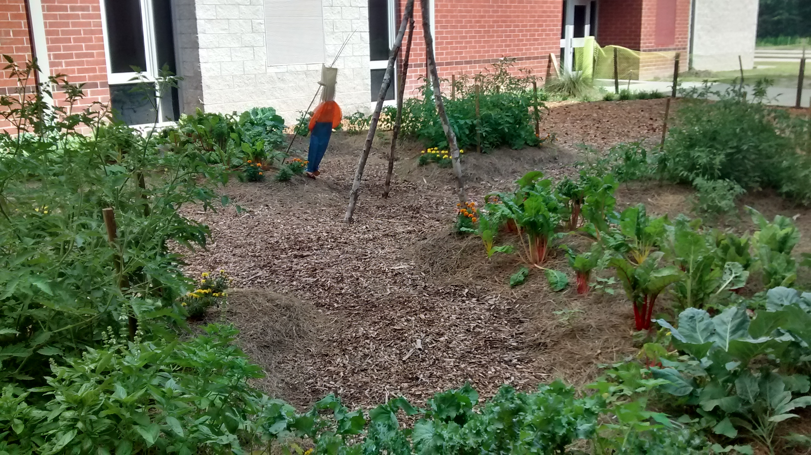 Permaculture Garden-Colleton County High School